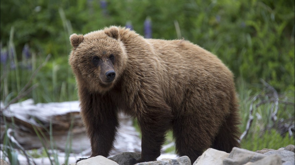 Bear, cubs kill worker at remote silver mine owned by Idaho company