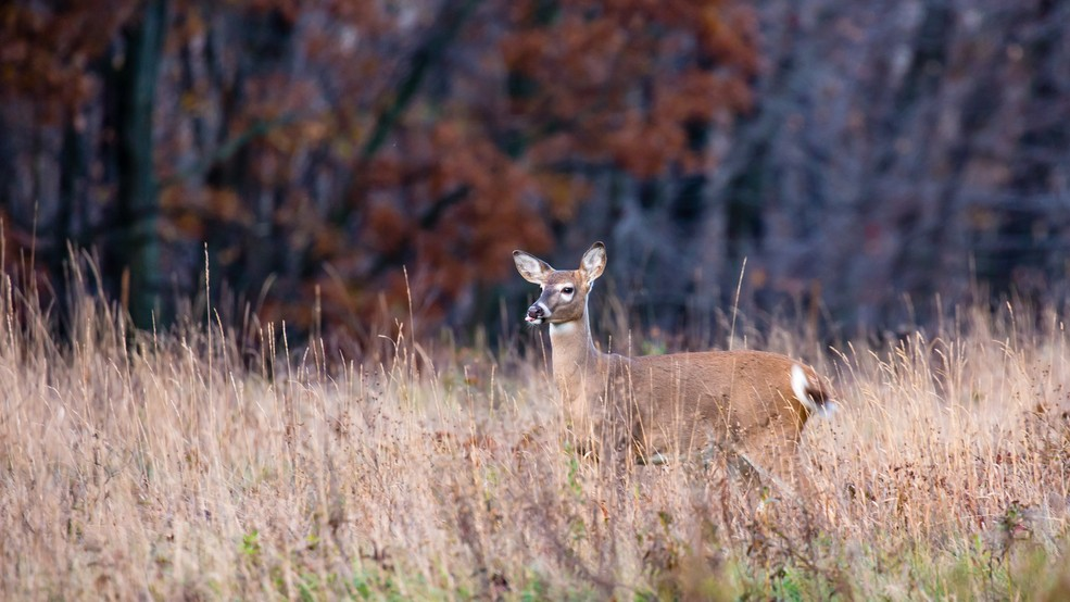 Idaho hunters warned of game meat in warmer weather | KBOI