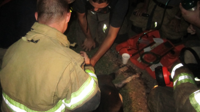 Hero of the night': Dog credited for alerting family of house fire